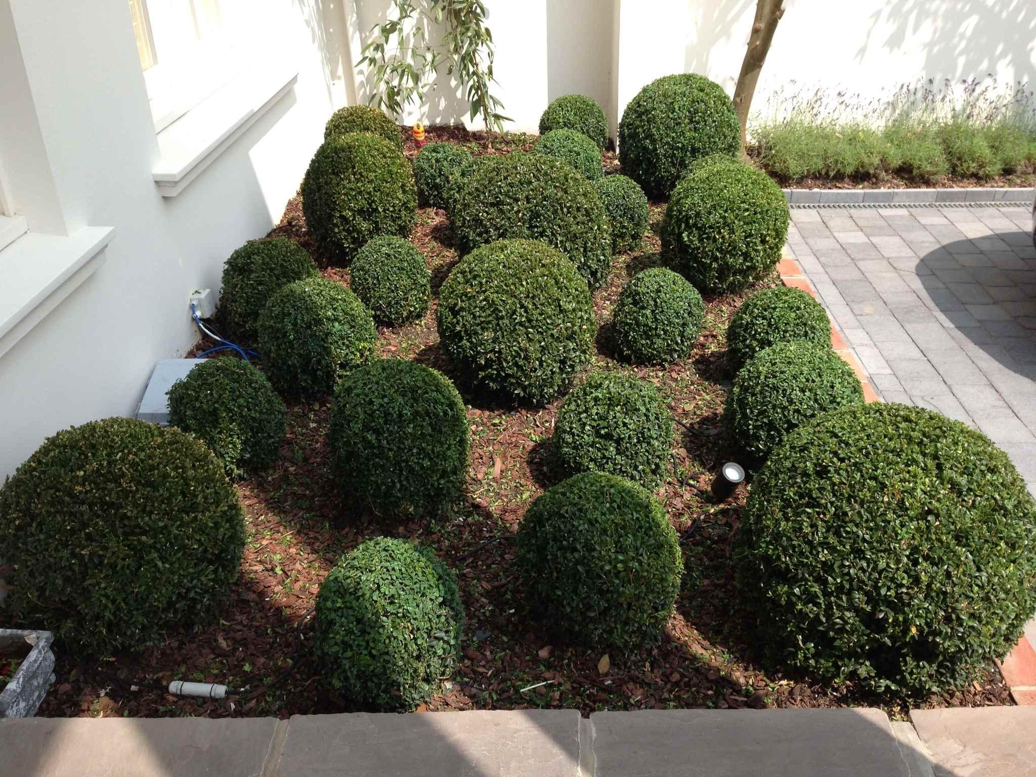 Hedge Design Trimming